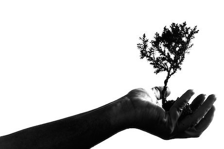 hand holding tree, which grows like employees' inner minds