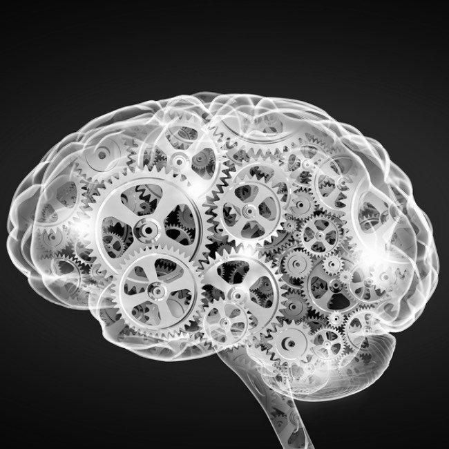 Mechanism inside human brain