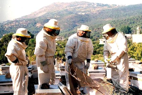 group of four bee keepers collectively learning the trade and safety